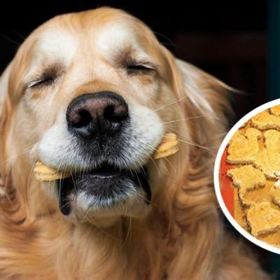 spent grain dog treats